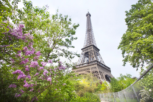 Tour of Paris + the Eiffel Tower + a River Cruise